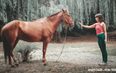 Social media tips straight from the horse's mouth